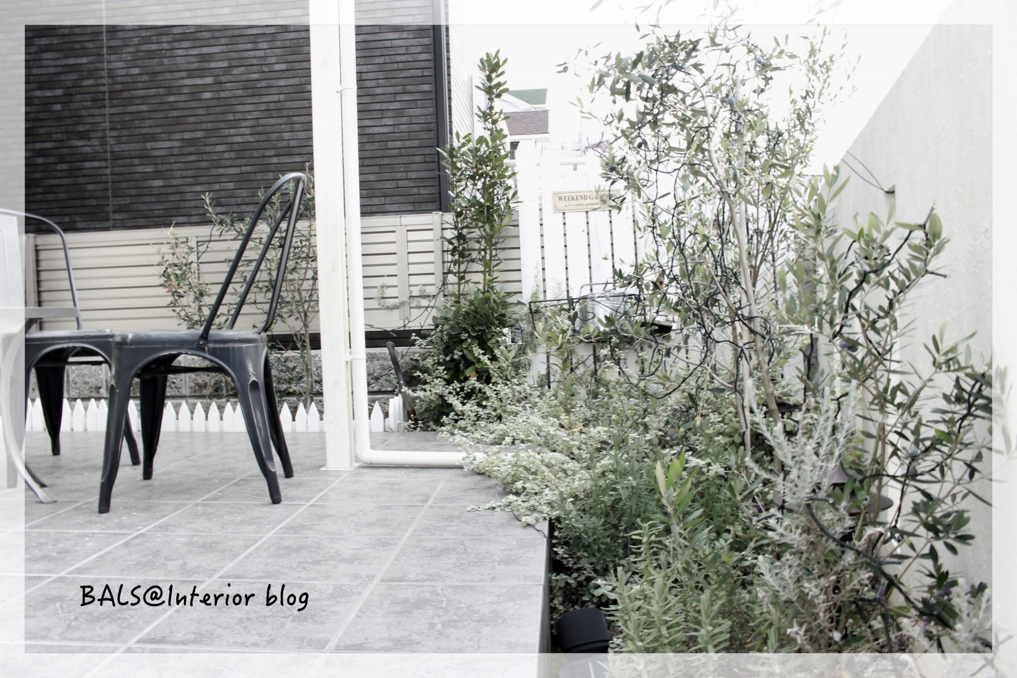 《リビング&庭のオリーブ》クリスマス仕様でライトアップ*