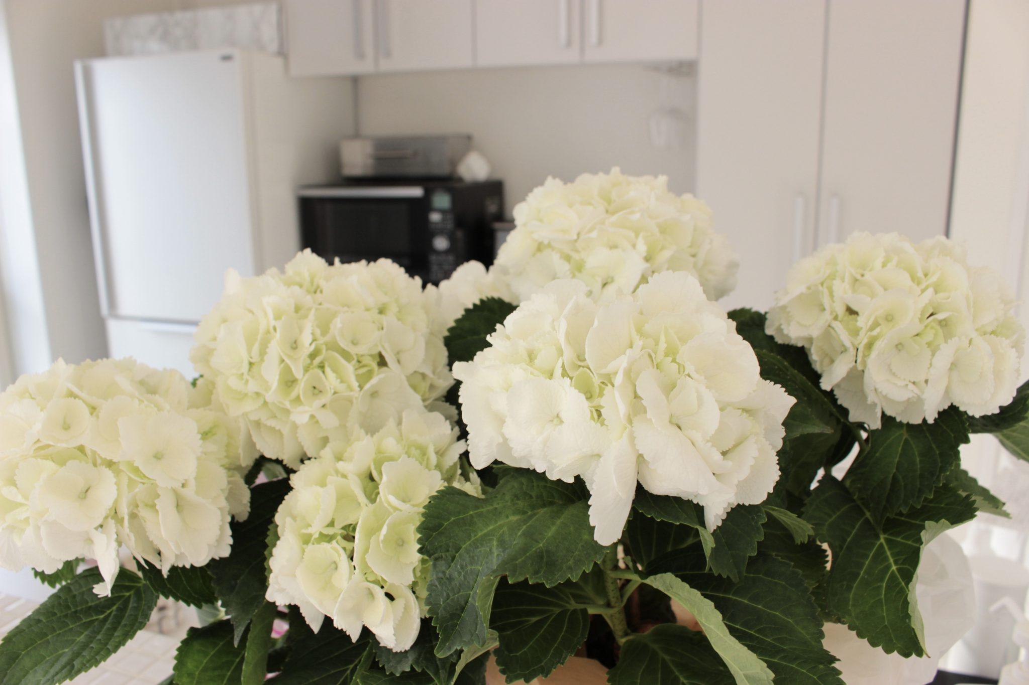 《インテリアになる白い花》花瓶に飾って部屋をおしゃれに♪